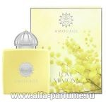 парфюм Amouage Love Mimosa